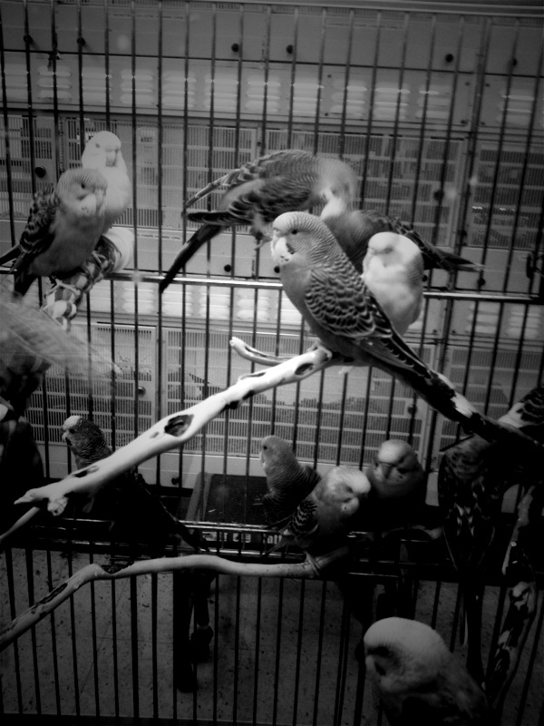 Like a Bird in a Cage